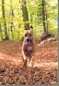 2008-10-18 Autumn Dog Walk 027