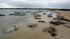 Stromatolite.atV2szwg9W1L.jpg