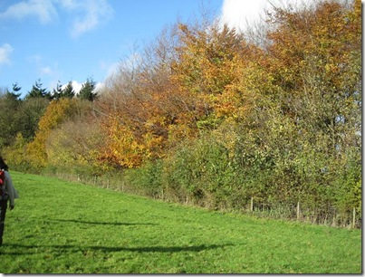 Bromfield Autumn Colours