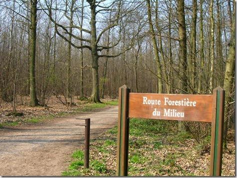 06_04_22_Foret_de_Montmorency_Chemin_du_milieu