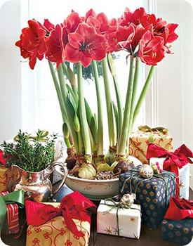 flowers-gifts-de