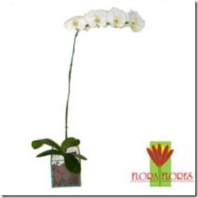 Flora Flores R$139,00