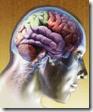 La mente y consciencia, funcionando en alguna parte del cerebro humano