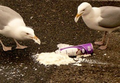 The Seagulls-Sheva Apelbaum