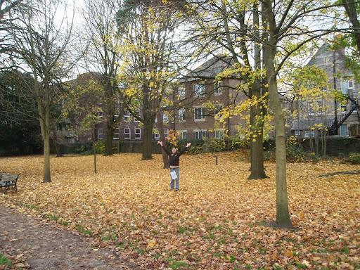 autumn in cardiff