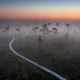 Mysteriuos Path by Rok Godec - Landscapes Travel ( estonia, path, trees, sunrise, morning, bog, sun )