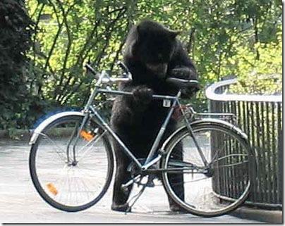 funny_bear_bike