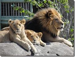 10.3.09 Zoo Trip (17)