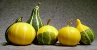 crossword-clue-gourds