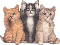 gatos animados
