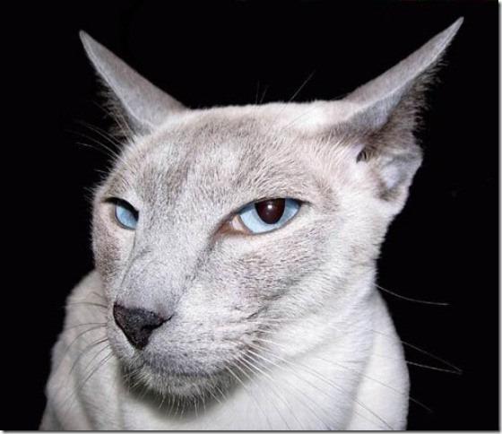 gato 1(3)