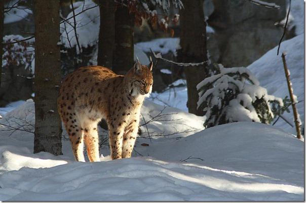 animales blogdeimagenes (23)