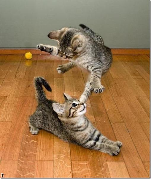 gatos divertidos patatitasylimones (22)