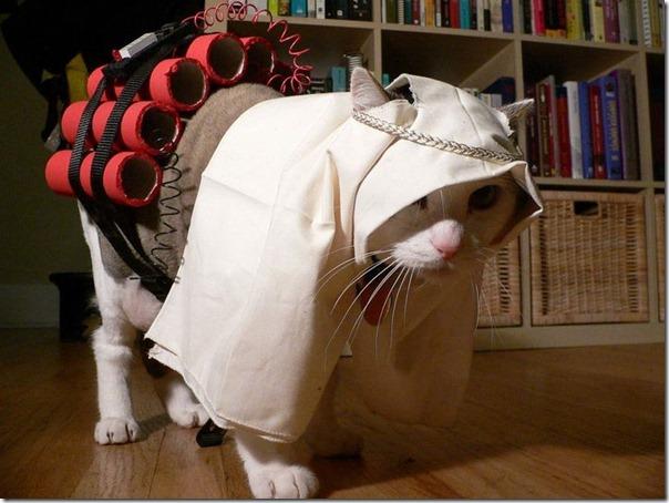 gatos divertidos patatitasylimones (10)