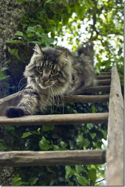gatos divertidos patatitasylimones (12)