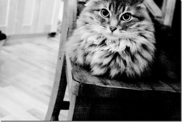 gatos divertidos patatitasylimones (17)