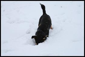 Sneeuw dec. 2009 102