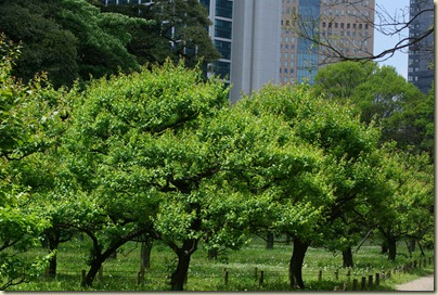 2010-05-15 Hamarikyu Gardens for Posting (46)