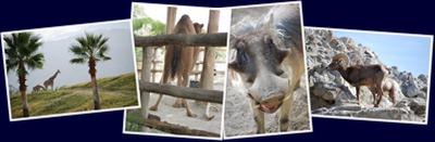View The Living Desert - Animals