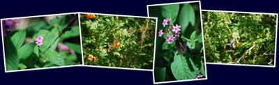View The Living Desert - Butterfies
