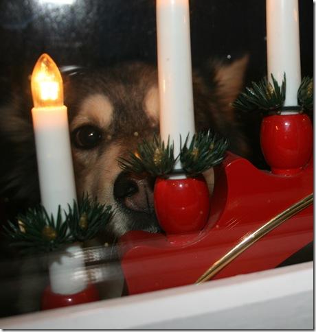 Byu'Ti speider etter nissen gjennom vinduet
