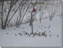 Fuglevennene våre 6 febr 2007