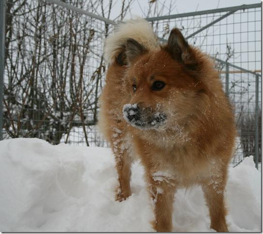 Cita i snøen 1