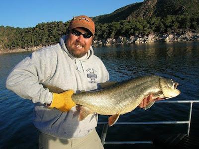 Lake trout monty 39 s trophy trout guide fishing flaming gorge for Flaming gorge fishing guides