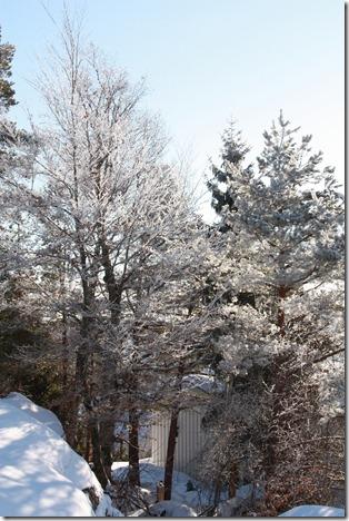 februar skøyter 252