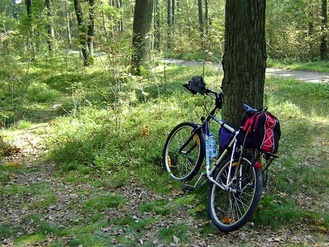 leśny odpoczynek na rowerowej drodze