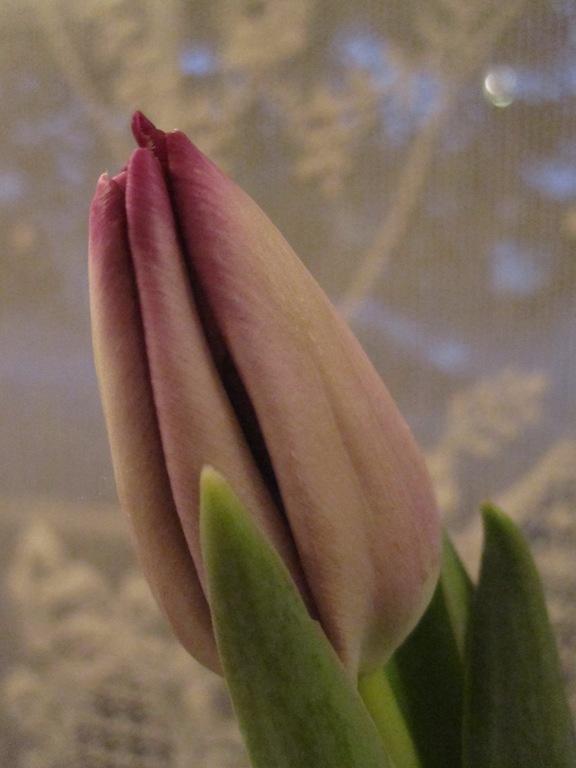 Valentine 061