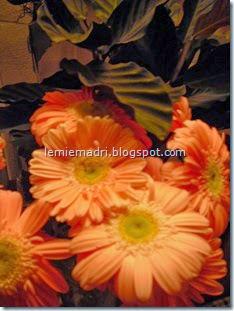 arancio gerbera