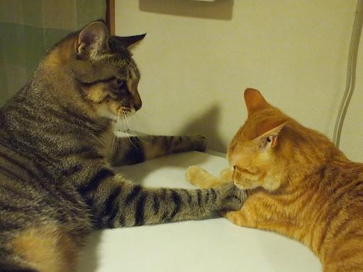 [写真]冷蔵庫の上で仲の良い二匹