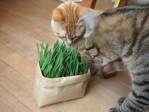 草 無印 猫