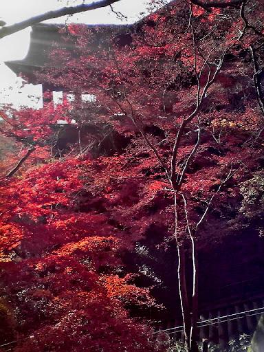 清水の舞台と紅葉の写真