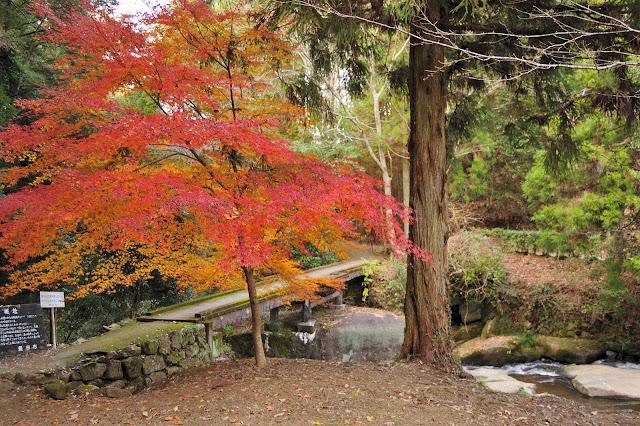歌石園地の紅葉の写真