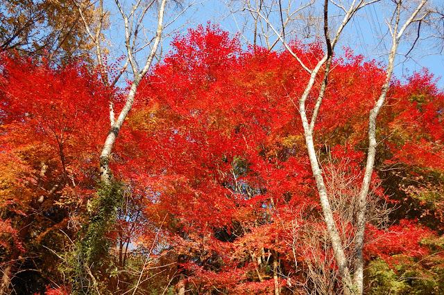 王滝渓谷の紅葉の写真