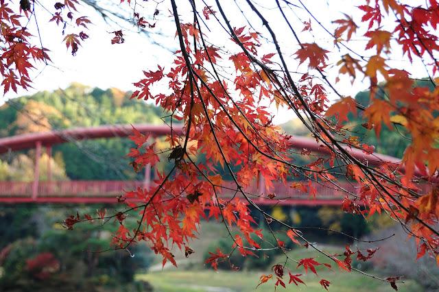王滝渓谷・紅葉の写真