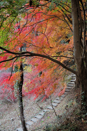 王滝渓谷の下り道の紅葉の写真