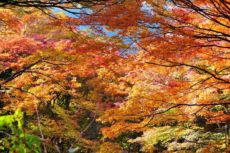 香嵐渓の飯盛山の紅葉の写真