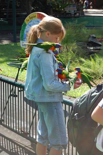 ロリキートへ餌をやる少女の写真
