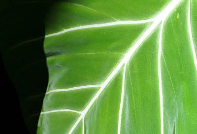 Velvety green leaf.