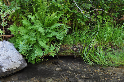 River, ferns, stone.