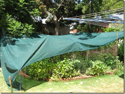 Garden Wrap 001