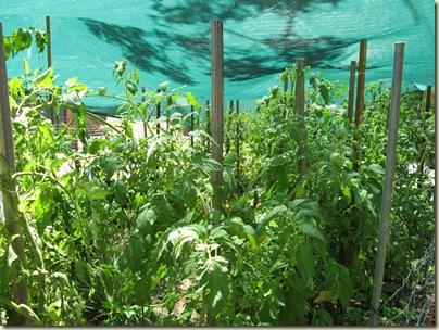 Garden Wrap 025