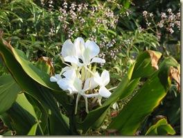 Garden & Compost 018