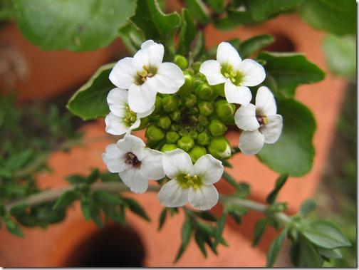 Spring Garden-78