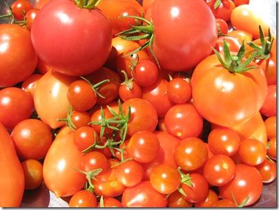 Tomatoes-25