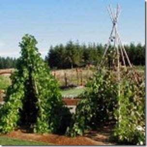Sunflower Garden Ideas sunflower garden in your back yard Image