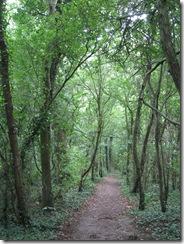 IMG_0010 woodland path